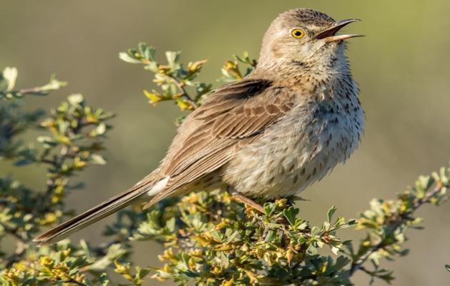 Songbird Survey in Eastern Washington
