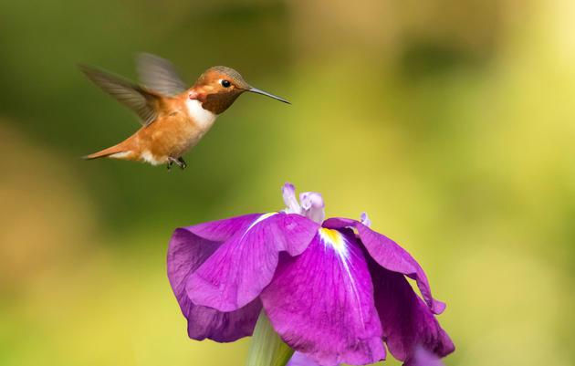Washington's Climate-Threatened Birds
