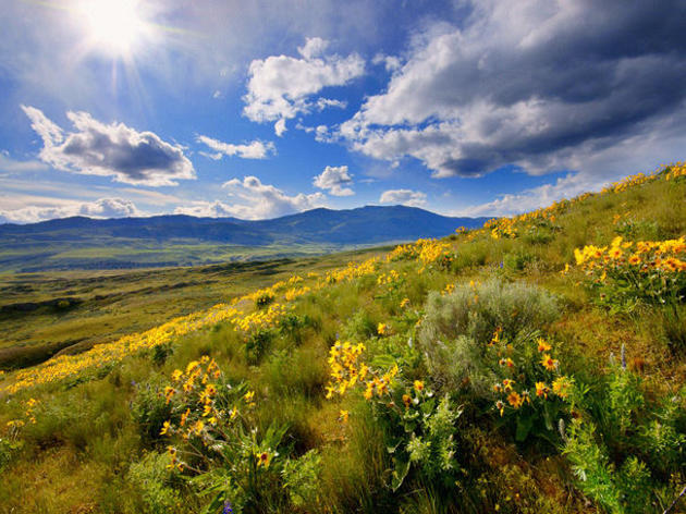 Conserving the Sagebrush Sea