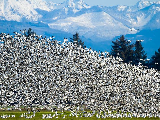 Modeling Avian Habitat Suitability in Puget Sound
