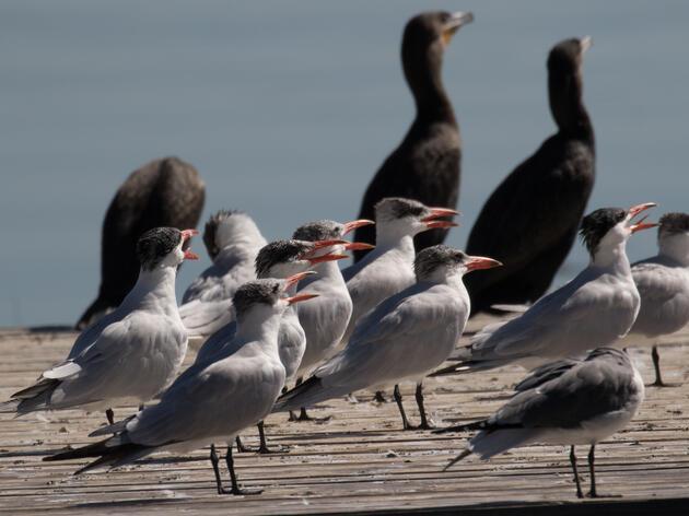 New Legislation Strengthens Federal Fisheries Law
