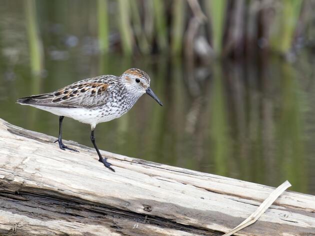 The Science Behind Saving Birds