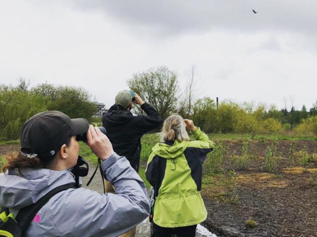 Seward Park Audubon Center Marks 10 years with BirdWeek Celebration