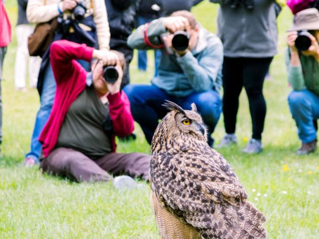 Capturing the moment at Seward Park Audubon Center