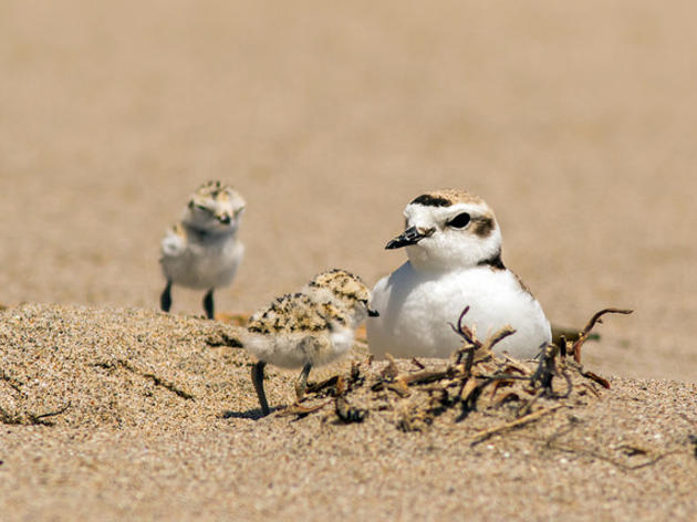 Audubon Coastal Ambassadors