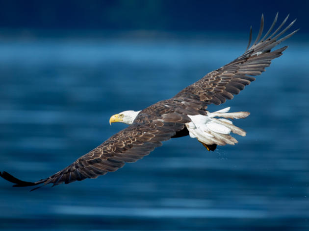 Washington Legislature Passes Strongest Clean Energy Bill in the Pacific Flyway