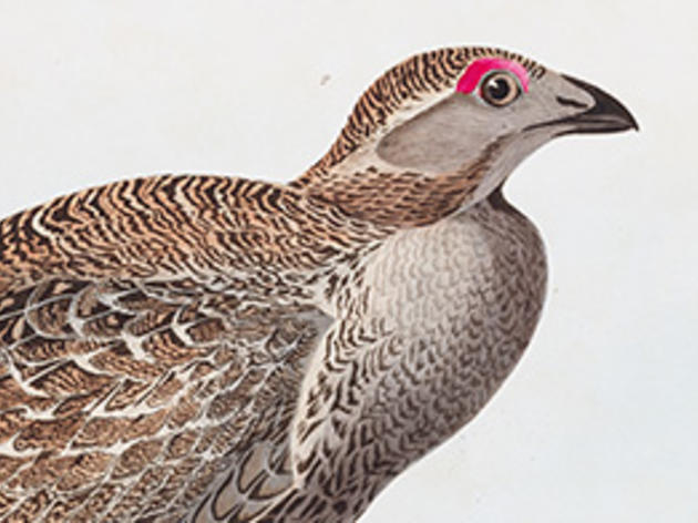 What's Up With the Greater Sage-Grouse?