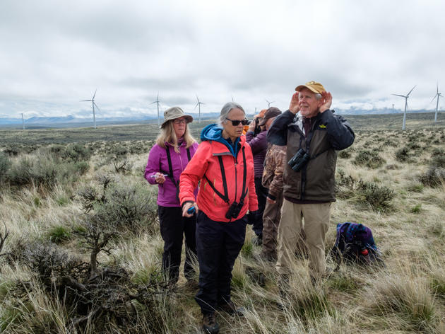 That's a Wrap: Sagebrush Songbird Survey Marks Fifth Year