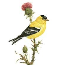 Washington State Bird Audubon Washington