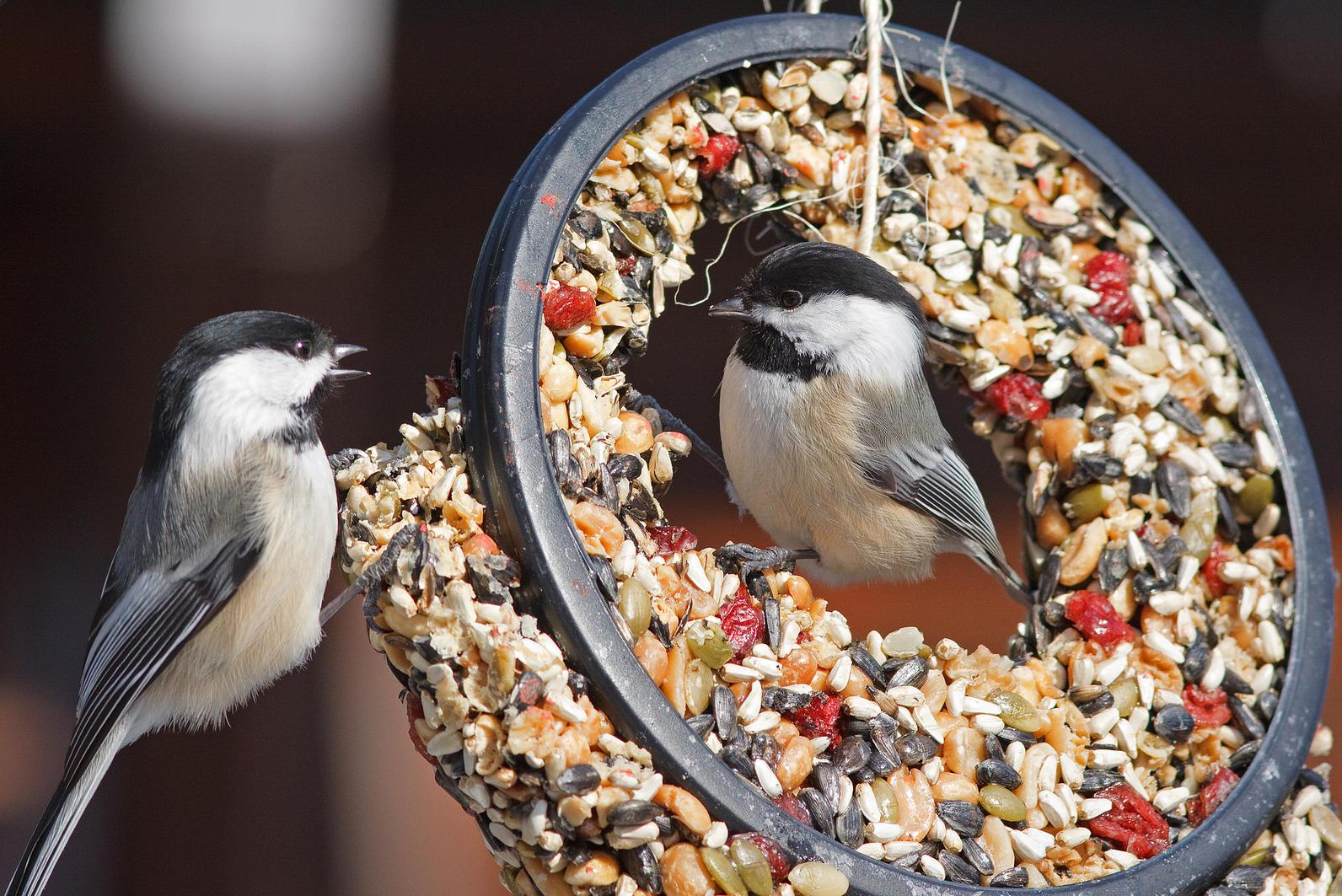 grants and fundraising audubon washington