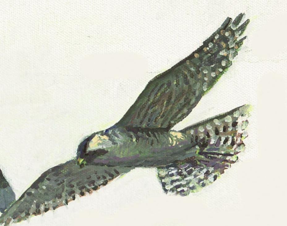 Washington Statewide Plan - Executive Summary   Audubon